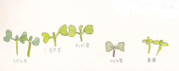 その他の芽