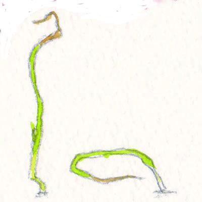 たまねぎの芽